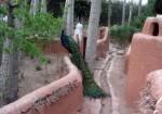 باغ پرندگان اصفهان,آدرس باغ پرندگان اصفهان,ساعت کار باغ پرندگان اصفهان,بلیط باغ پرندگان اصفهان