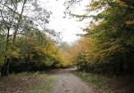 پارک جنگلی سراوان رشت - سراوان - جنگلهای گیلان - سراوان کجاست - جنگل های شمال