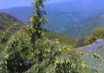 جنگل فندقلو - نمین