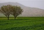 روستای نجوبران - هرسین