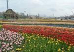 پارک دانشجو ارومیه - گوللر باغی