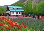 باغ گل لاله گچسر - روستای گرماب - باغ لاله روستای گرماب - جاذبه گردشگری جاده چالوس