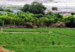 روستای تمین میرجاوه - دهستان تمین - قلعه تمین - بهشت کوچک سیستان و بلوچستان